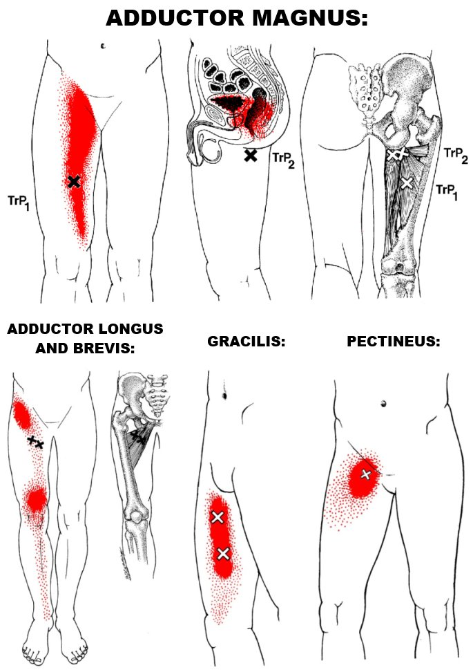 hip adductors trp
